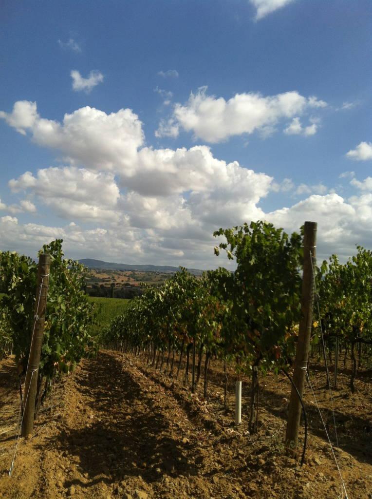 Tuscany_vineyard