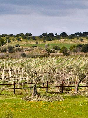 ragusa-vineyard-new300x400