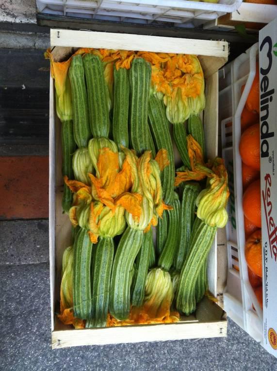 italian zucchini and zucchini flowers
