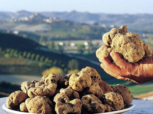 Tuber Magnatum Pico, aka white truffle