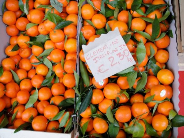 clementines are in season