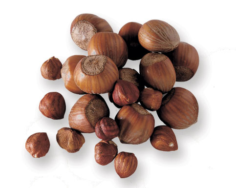 hazelnuts are in season