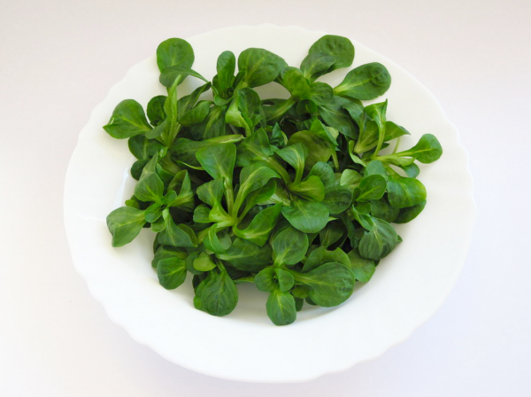 valerianella (lamb's lettuce) is in season