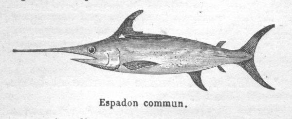 sicilian swordfish dish · www.casamiatours.com