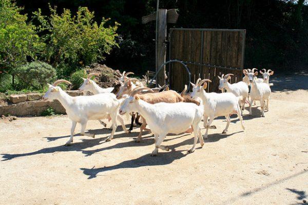 Farm life: cheese making in Lazio · www.casamiatours.com