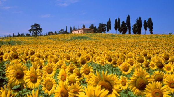Ferragosto in the country · www.casamiatours.com
