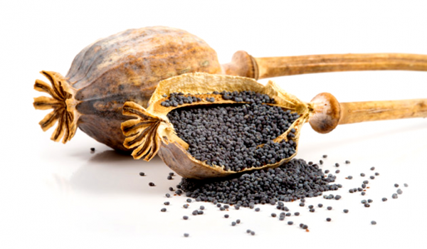 The Spice Cabinet - poppy seeds · www.casamiatours.com