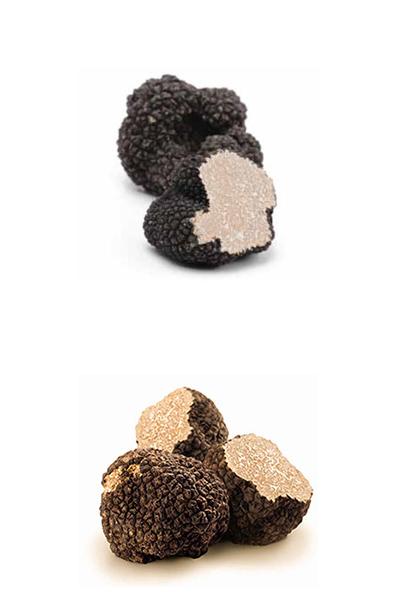 Truffles · www.casamiatours.com