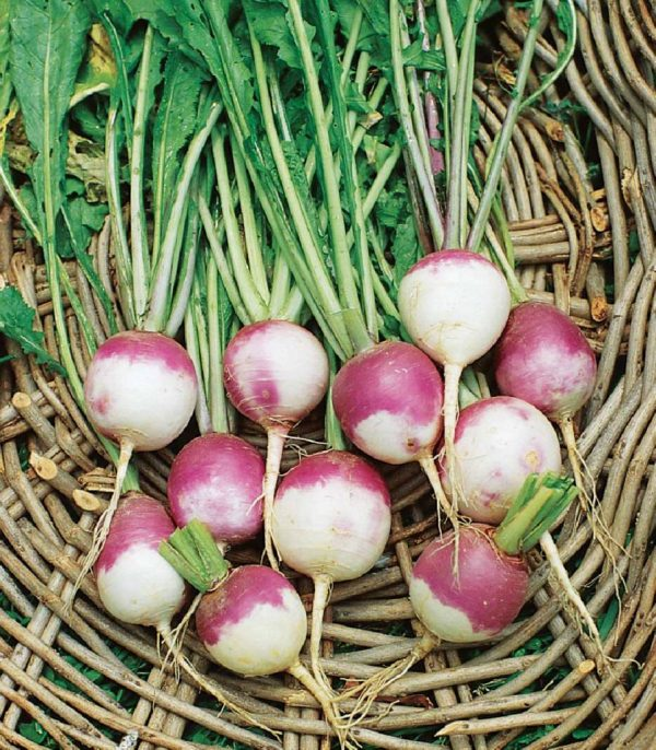 Rooting for Turnips · www.casamiatours.com