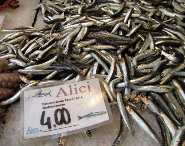 alici anchovies