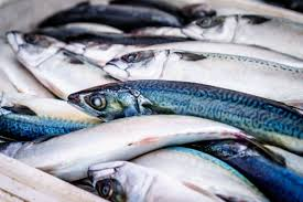 sgombri mackerel