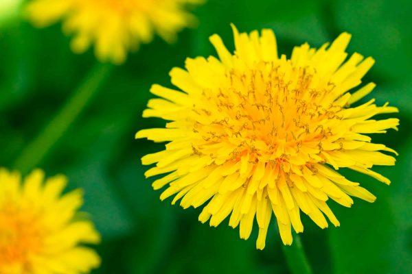 flowers in food