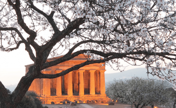 almond tree blossom fest in Agrigento