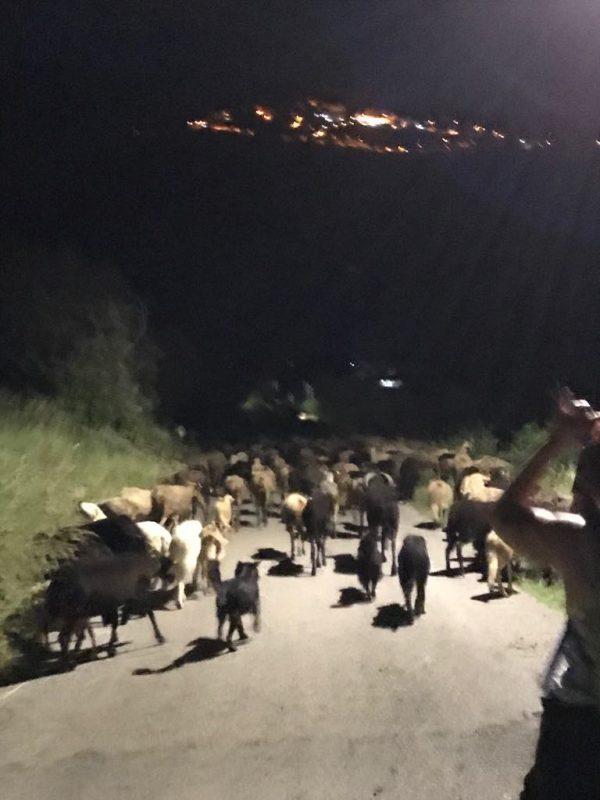 transumanza from Valle di Comino di Prati di Mezzo, by way of Picinisco