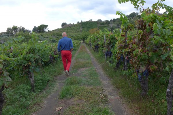 Roadtripping Guide to Sicilian Wineries