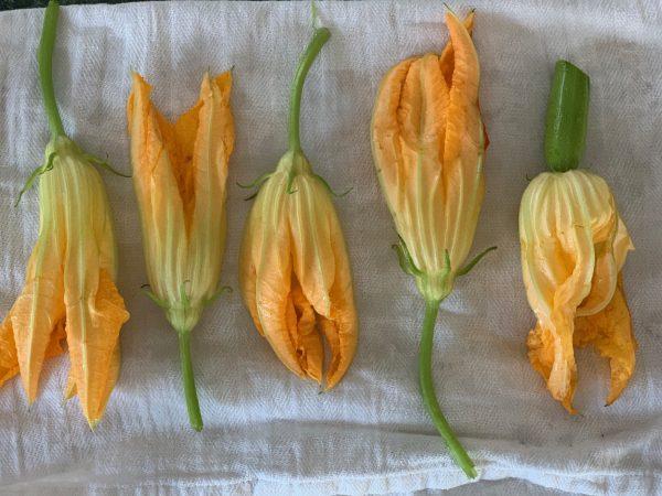 dry the zucchini blossoms