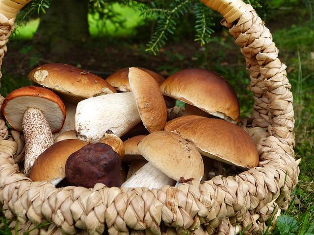 Italian mushroom recipes