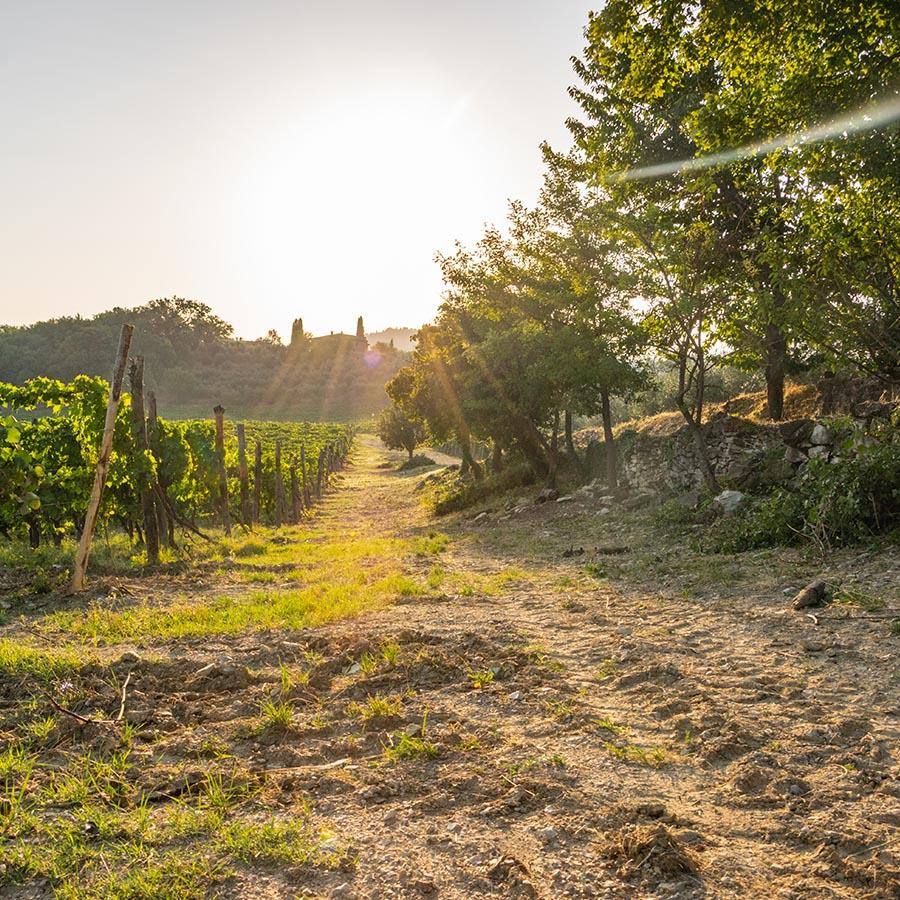 Vineyard Discovery