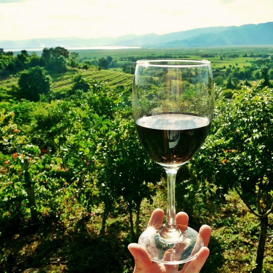 Tuscany Vineyard Discovery