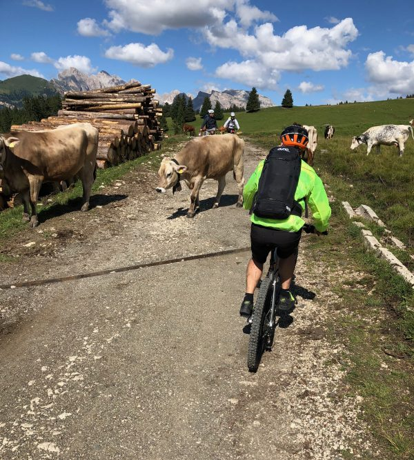 biking and cows in South Tyrol