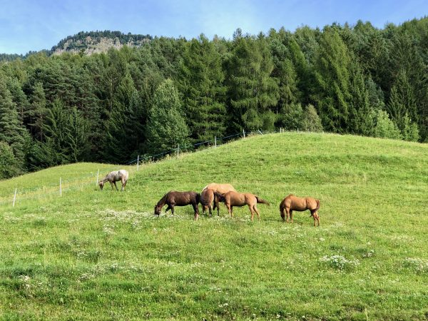 Mother Nature at its best in Trentino-Alto Adige